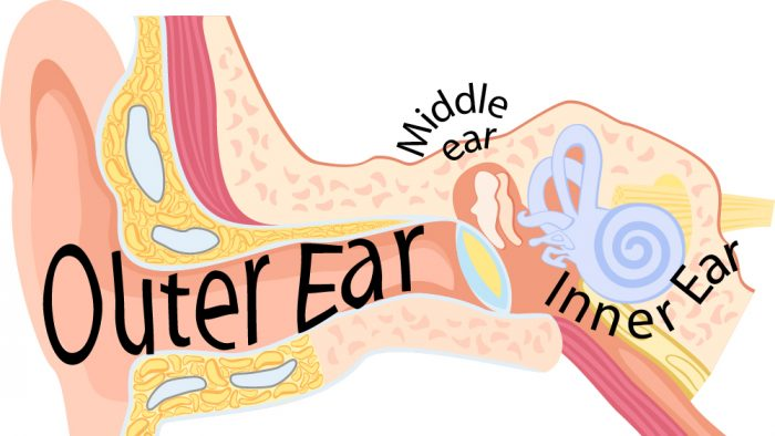 New Urgency for Treating Hearing Loss
